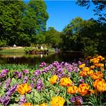 Foreground Tulips thumbnail
