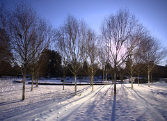 winter wonderland (amazingstoker) Tags: snow eastrop birch roundabout basingstoke amazingstoke basingrad hampshire backlight contre jour silhouette shadow perspective blue sky white bramch trunk tree