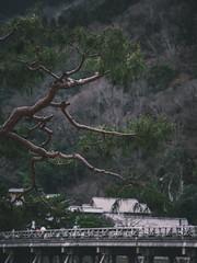 渡月橋|嵐山 (里卡豆) Tags: 日本 jp olympus 40150mm f28 pro olympus40150mmf28pro olympuspenf penf