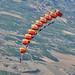 Patrulla Acrobática de Paracaidismo del Ejército del Aire