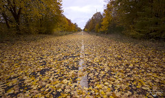 Autumn Highway (Left in the Lurch) Tags: abandoned highway autumn fall leaves