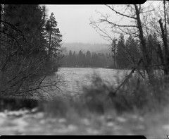 near mt lassen on 4x5 film (Garrett Meyers) Tags: graflexseriesd4x5 4x5 largeformat film filmphotographer 4x5film graflex graflex4x5 graflexphotographer blackandwhitefilm handheld handdeveloped firstsnow blizzard northerncalifornia trees whitemountain powder snow garrettmeyers garrett meyers