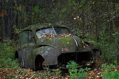 Morris Minor (mariburg) Tags: rotten marode alt old rostig rustycars canonef2470mmf28liiusm canoneos6d morris morrisminor