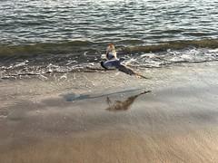 motion (m_big_b) Tags: birdinflight seashore bird seaside seagull nyc usa coneyislandbeach ny newyorkcity