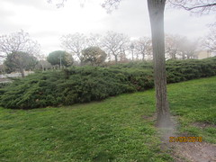Greenery, grass, shrubs and trees,    Parque Enrique Tierno Galvan (1986) Madrid. (d.kevan) Tags: parksandgardens parqueenriquetiernogalvan 1986 paths trees plants grass madrid streetlamps shrubs buildings