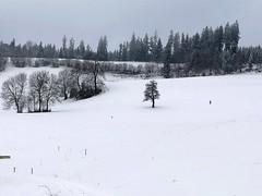 Winter 2019: oberhalb Lütiwil Arni (Martinus VI) Tags: winter winterlandschaft hivers schnee snow nieve neige emmental kanton canton de bern berne berna berner bernese schweiz suisse suiza switzerland svizzera swiss y190112 martinus6 martinus6xy martinus martinusvi