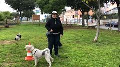 IMG_8472 (Doggy Puppins) Tags: educación canina adiestramiento canino perro dog