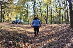 Wood (Concetta Scaramuzzi) Tags: curvymodel curvy model autunno autumn italia italy cold leaf leaves