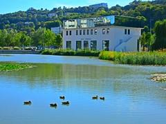 Lyon (Susannaphotographer) Tags: river lyon rivers france francia ducks summer summertime pond riverside rhône