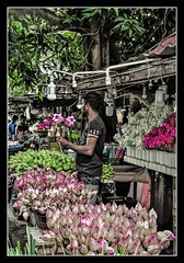 """Be like a lotus. Let the beauty of your heart speak. Be grateful to the mud, water, air and the light.""   _ Amit Ray (Ramalakshmi Rajan) Tags: lotus flowerseller kelaniya srilanka people nikon nikond5000 nikkor18140mm streetvendors smallscalevendors"