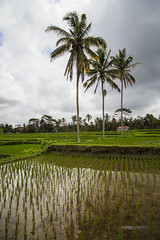 INDONESIA_083_0818@ANDREAFEDERICIPHOTO (Andrea Federici) Tags: indonesia andreafedericiphoto travel travelling java bali flores nature people traveller holiday