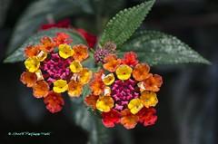 D7K_9264001 (Alberto Márquez Marín) Tags: 2017 albertomarquezm almavzla bogota colombia jardinbotanico