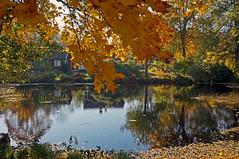 Autumn Lake (amberserg) Tags: sony sweden autumn xperiax stockholm lake
