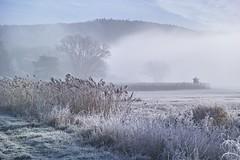 Lindauer Moor 021218-34 (martinritter1) Tags: moor nebel frog winter frost dust