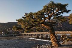 Togetsukyo Bridge (bacon.dumpling) Tags: arashiyama arashiyamapark autumn fallfoliage fujifilmxpro2 fujinonxf16mmf14rwr japan katsuragawariver koyo kyoto leafchangingseason togetsukyobridge