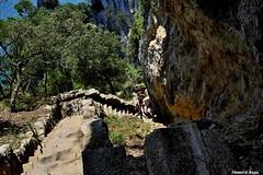 Bajada sinuosa. (Howard P. Kepa) Tags: cantabria santoña montebuciero farodelcaballo escalera escalones arboles rocas marcantabrico bajada