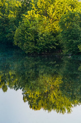 White River Trees (Bracus Triticum) Tags: white river trees indianapolis インディアナポリス indiana インディアナ州 unitedstates usa アメリカ合衆国 アメリカ 8月 八月 葉月 hachigatsu hazuki leafmonth 2018 平成30年 summer august