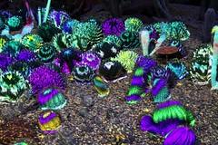Electric Desert (joeksuey) Tags: electricdesert desertbotanicalgarden lights color klipcollective phoenix arizona joeksuey display sonoranpassage desertchorale succulentcolorata cactisynesthesia cacti saguaros goldenbarrel infinity crystal