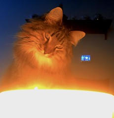 Before Curiosity Could Kill the Cat (backbeatb00gie) Tags: cat elsie home iphone candid candle flame looking