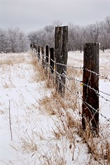 Fenceline (Miguelski Photography) Tags: canada winter rural snow fence barbedwire rustic prairie farm