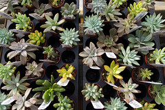 Succulents (Brendan Chapuis) Tags: plants logees greenhouse cactus garden green contrast sony a6500 sigma 16mm