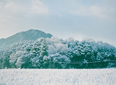 blanket of snow (Kenji Kitae) Tags: snow winter morning mountain tree wood field green white nature lifestyle lifework landscape location hiroshima japan earth