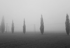 Piccole e tenui note nella nebbia (Aellevì) Tags: inverno nebbia fili uccelli pioppocipressino