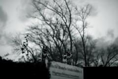 gray sky above (Amselchen) Tags: mono monochrome bnw blackandwhite bokeh blur dof depthoffield season wainter sky canon samyang canoneos6dmarkii 85mmf14
