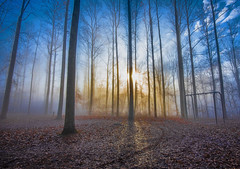 Blue Sunrise (Bernie Kasper (5 million views)) Tags: art berniekasper blue beautiful cliftyfallsstatepark color cliftyfalls d750 effect family fog fall hiking indiana jeffersoncounty light landscape leaf love madisonindiana madisonindianacliftyfallsstatepark nature nikon naturephotography new morning outdoors outdoor old photography park photos mist raw statepark travel tree trees trail unitedstates usa sunrise sun