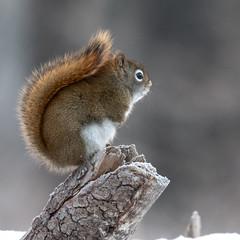untitled-0248.jpg (Alvin Sangma Photography) Tags: saxzimbog nikkor70300afpvr nikon winter naturephotography nikond500