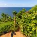 Tropical way to Hideaways Beach Princeville Kauai Hawaii