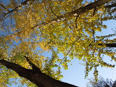 trees (cloversun19) Tags: gold rain animal field grass landscape branches leafs foliage sky russia russian spb tree walking country holiday holidays park garden dream dreams positive forest happy view grey legend fairytale fir firtree birch village evening romantic october september car road street blue maple leaves town city light sun yellow autumn trees