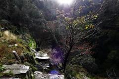 dialogues (*F~) Tags: coimbra serradoaçor homeland nature mountain light darkness flare path walking walkers portuguese portugal dialogue