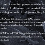 Did you know:  U.S.  and Canadian governments have a history of inhumane treatment of  the working animals of Indigenous People thumbnail