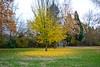 Herbst (sibwarden) Tags: herbstliche herbstfarben