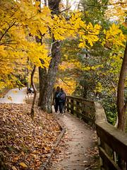 20181104-161351-043 (JustinDustin) Tags: 2018 attraction autumn blairsville fall ga georgia nga northamerica northgeorgia seasonal us usa unitedstates vogelstatepark year