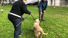 IMG_8609 (Doggy Puppins) Tags: educación canina adiestramiento canino perro dog