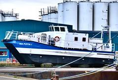 Sea Puffin 1 - Aberdeen Harbour Scotland - 1/12/2018 (DanoAberdeen) Tags: vattenfall windpartneras esna smallcraft windfarm renewableenergy windpartner surfaceeffectship candid amateur danoaberdeen danophotography aberdeen aberdeenscotland aberdeenharbour aberdeencity aberdeenunionstreet grampian psv tugboat tug tugboats oldaberdeen seafarers seaport northsea northeast nikon northseasupplyships scotland scottish seascape seasalt seashore winter workboats wasser watercraft weather walks ecosse escocia escotia recent riverdee river transport uk iskoçya offshore oilships oilrigs pocraquay port summer scotia schotland scotch shipspotting docks geotagged harbour historicscotland haulage lifeatsea szkocja abz clouds cargoships vessels boats maritime merchantnavy merchantships seapuffin1