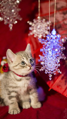 20160921_5094c (Fantasyfan.) Tags: yule christmas atmosphere kitten kuunkissan fantasyfanin
