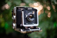 WISTA 45D (Valentine Kleyner) Tags: wista nikon d600 nikkor camera