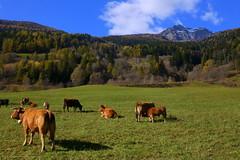 Pasture in Switzerland (annalisabianchetti) Tags: pasture pascolo paesaggio landscape switzerland svizzera grigioni grisons countryside travel mountains montagne beautiful