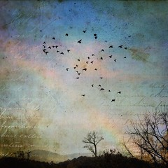 Driving home from the mountains on a rainy day. (jeanne.marie.) Tags: november blue pink clouds sky byroadside autumn colorful textured rainbow landscape trees birds iphoneography iphone7plus northcarolina i40 mountains drive day rainy