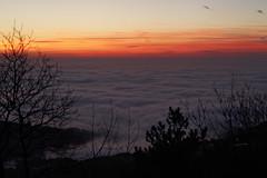 IMG_9696 (Selena & Danny) Tags: trieste canon 5dmk2 nebbia fog campi di golf samyang 85mm t15