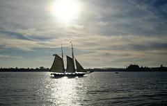 Sailing in San Diego, California (` Toshio ') Tags: toshio sandiego california sandiegoharbor harbor tallship sailing sail ship water usa sun fujixt2 xt2