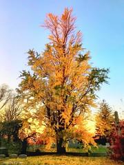 #greenwoodcemetery #brooklyn  #newyork #autumn #fall (lelobnu) Tags: greenwoodcemetery brooklyn newyork autumn fall