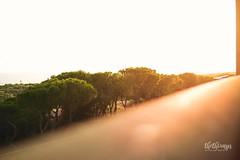 spain '17 (thethomsn) Tags: spain dof view balcony trees outdoor sunlight sunset