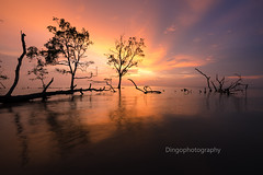 Light and shadow (Dingo photography) Tags: nature colourful dingophotography 1530mm d750 fx landscape moody sea lightandshadow orange sun goldenhour uwa tamron nikon dslr seascape trees sunset