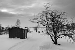 Paysage (Agirard) Tags: jena zeiss tessar lens vintage 50mm 2850 sony a7ii cabanon shack shed winter snow fog bw nb blackwhite noirblanc landscape orleansisland quebec canada
