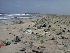 Praia dos Achados2 SL (ilheuraso) Tags: sea turtle tartarugas santaluzia detrits lixo nesting bioscv caboverde