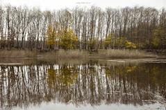Heartbeat of Nature (oskaybatur) Tags: autumn november türkiye turkey danamandıra trakya oskaybatur 2018 pentaxkr pentaxart justpentax nature reflection sonbahar kasım sigma1770 landscape trees lake